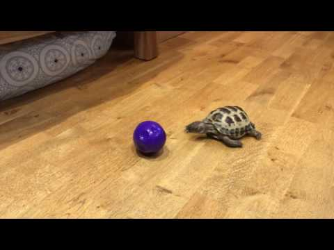 How To Make Your Tortoise Run Like Hell!