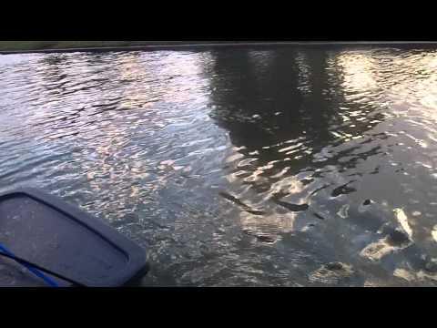 Ultimate Motor Double Kayak Dolphin Encounter