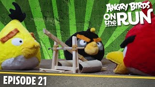 Angry Birds on The Run | The Birds Get Angry - S1 Ep21