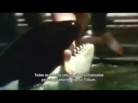 Trailer do filme Blackfish - Fúria Animal