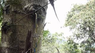 Kolibris im Tal von Cocorá