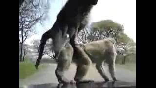 Failnation: Funny monkeys