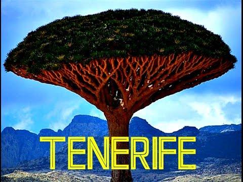 КАНАРЫ: Драконовое Дерево на острове Тенерифе... CANARY ISLANDS SPAIN