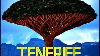 КАНАРЫ: Драконовое Дерево на острове Тенерифе... CANARY ISLANDS SPAIN(Путешествие в Голливуд: Ответы на вопросы http://anzortv.com/forum ТЕНЕРИФЕ влог: Драконовое Дерево Смотрите всё путе..., 2015-02-18T00:47:06.000Z)