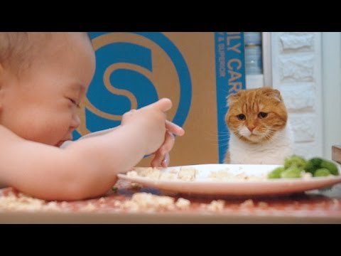 Thumbnail for Cat Video Cat Watches Baby Eat
