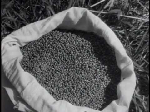 U.S. Department of Agriculture: Hemp for Victory (1942)