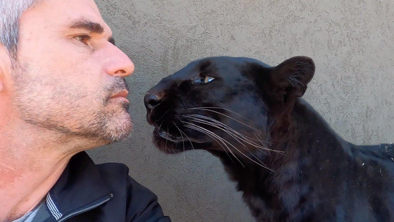 Meet The Characters: Nikita and Coal   The Lion Whisperer