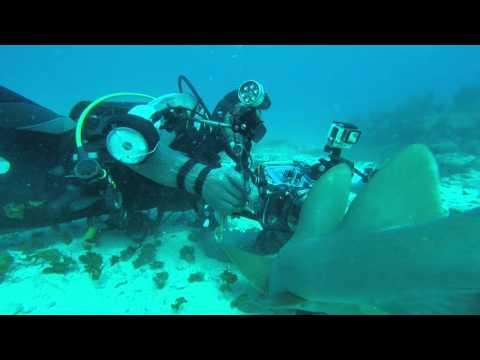Ocean Explorers Shark Dive 1   St Maarten   Jan 2016