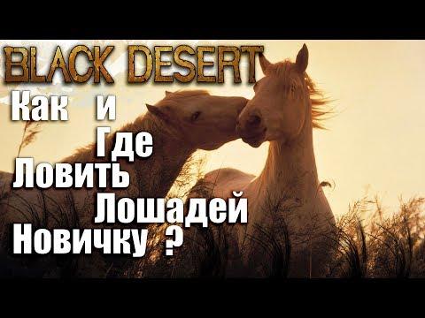 Как приручить лошадь в бдо