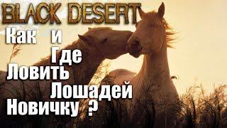 black Desert Online. Как купить для лошади седло, стремя, подковы, броню?