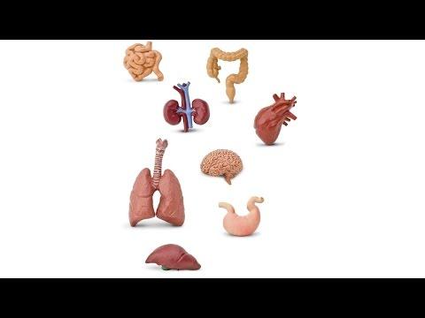С6 ЕГЭ по биологии - ЕГЭ и ОГЭ