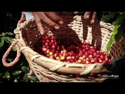 The Genuine Origin Coffee Project | Welcome to Honduras