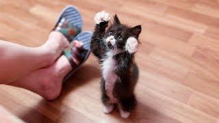 おかしい猫 - かわいい猫 - おもしろ猫動画 HD #241 https://youtu.be/G...