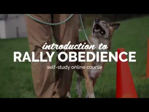 Introduction To Rally Obedience - Self-Study Course