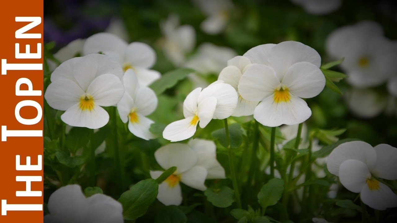 The Top Ten Most Most Beautiful White Flowers Youtube
