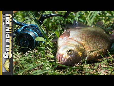 Рыбалка с фидером на Москва-реке в июне. Июнь - на рыбалку плюнь? [salapinru]