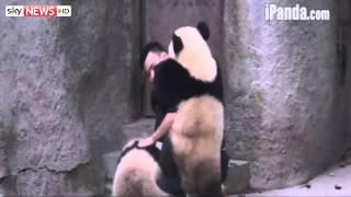 Cheeky Young Pandas Refuse Their Medicine