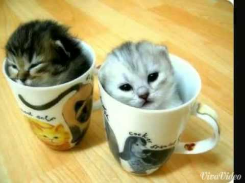 Cute Pictures of Kittens (Scary Pop Up)