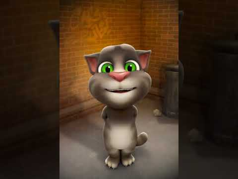 Kucing menyayi lagu tak tahu malu