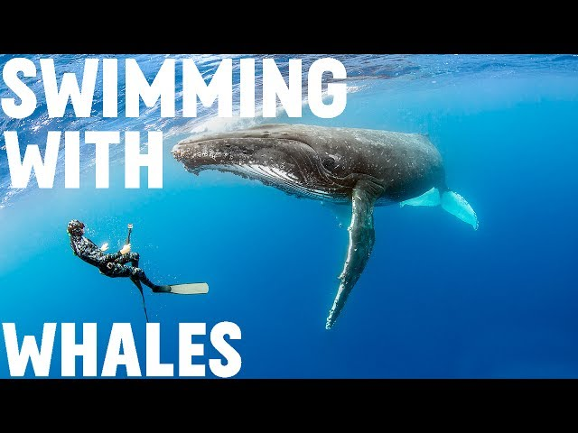 Swimming With Humpback Whales in Tonga // S0E3