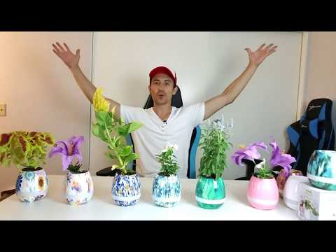 Intelligent Music Flowerpot Pros & Cons | Touch Plant for Music!!!