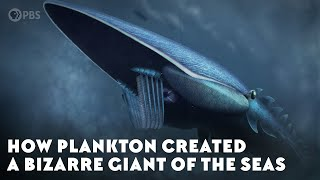 How Plankton Created A Bizarre Giant of the Seas