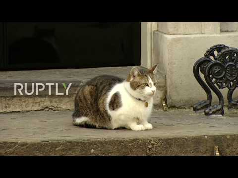 UK: Larry the Cat only Downing Street resident certain of home following hung parliament