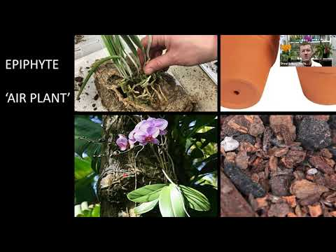 Horticulture How-To: Orchid 101