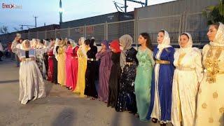 Hakiki Şevko Halayı 2021 Kürt Aşiret Düğünü - İşte Böyle Oynanır