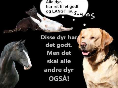 Bilderesultat for dyremishandling