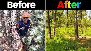 Forest Transformation You Wont Believe!!