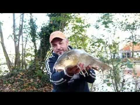 Test des cannes Barbeau Greys (Madfred Angling)
