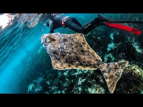 Return To The Arctic - HALIBUT Spearfishing In Freezing Waters