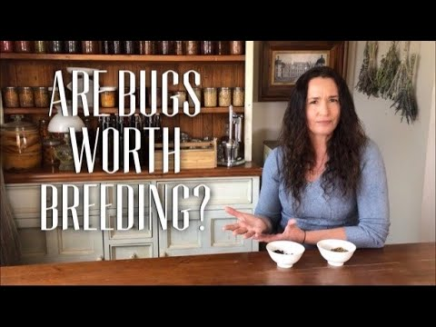WHAT DO BUGS TASTE LIKE? - are bugs Worth Breeding?