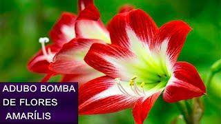 Adubo Para Planta Amarílis – Super Floração