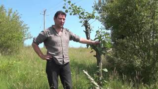 The Alder Tree Rescued pt 2.