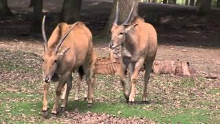Métier : curateur au zoo de Thoiry