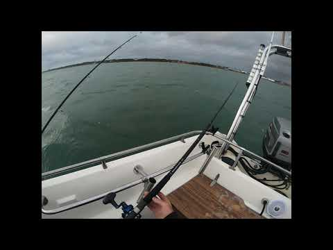 Zziplex Uptide Rod Review And Avet Mc Cast Reel Southcoast UK