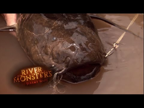 Getting Close To The Lungfish - River Monsters