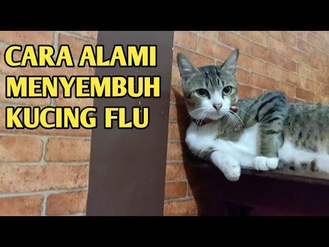 cara-alami-mengobati-kucing-flu-tuntas-dengan-satu-bahan-alami
