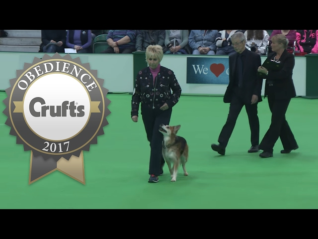 Obedience Championship - Bitches - Part 18 | Crufts 2017