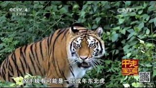 欢迎订阅走遍中国频道https://goo.gl/IMynXW 本期节目主要内容: 吉林省...