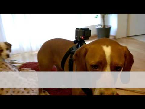 New Toys For The Beagly Boys - #8 My Intelligent Dogs - Smile