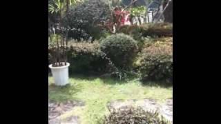 庭であそぶマリオ4才 水が大好きマリオ4才 水を飲みすぎてむせるマリ...