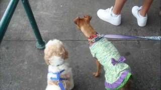 New York City Canine Cruise!