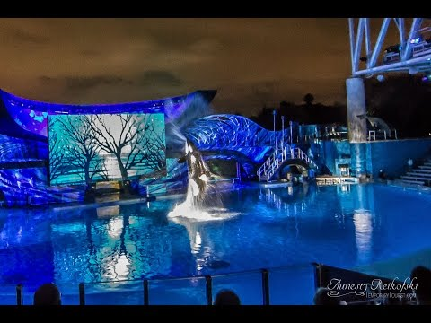 Shamu Christmas Miracles SeaWorld Orlando Christmas FULL Show 2014