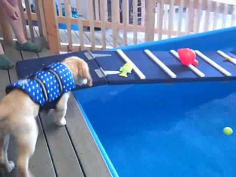 How Do We Introduce A Dog To The Pool Youtube