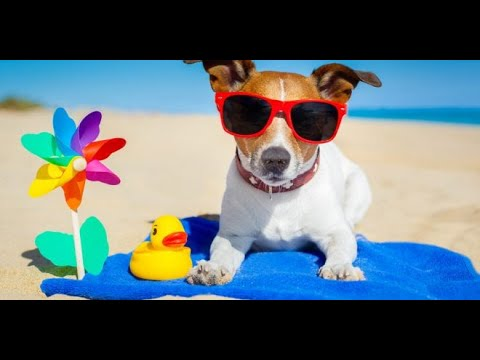 Why Do Dogs Love To Lay In The Sun? Ep1