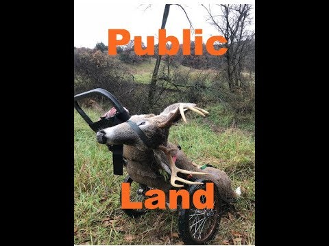 Missouri DIY Public Land Rut Hunting
