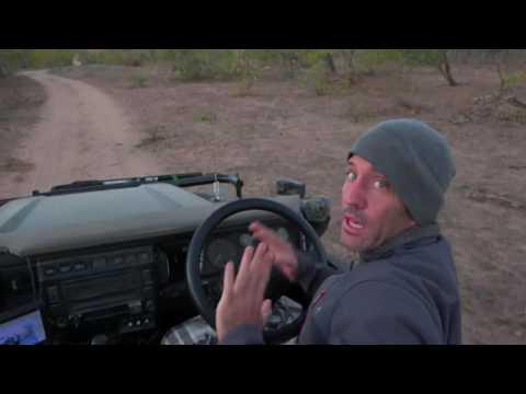 Baby Elephant Charging (rare) Safari Live